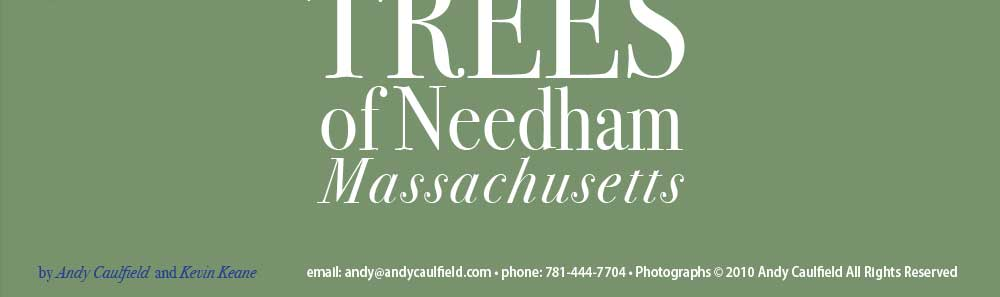 the trees of needham